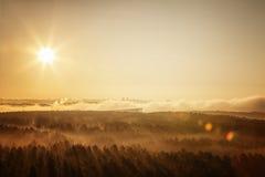 Foresta nebbiosa in Bielorussia Fotografie Stock Libere da Diritti