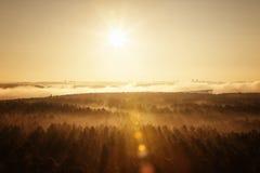 Foresta nebbiosa in Bielorussia Immagine Stock