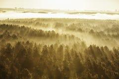 Foresta nebbiosa in Bielorussia Immagine Stock Libera da Diritti