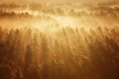 Foresta nebbiosa in Bielorussia Fotografie Stock