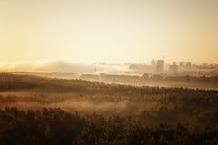 Foresta nebbiosa in Bielorussia Minsk Immagini Stock Libere da Diritti