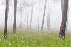 Foresta nebbiosa con i fiori sulla terra Fotografia Stock Libera da Diritti