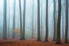 Foresta nebbiosa del faggio di autunno Fotografia Stock