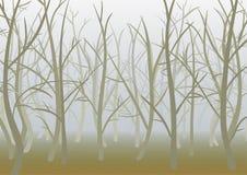 Foresta nebbiosa della molla Fotografia Stock