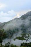 Foresta nebbiosa della montagna Fotografie Stock