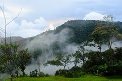 Foresta nebbiosa della montagna Immagine Stock