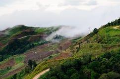 Foresta nebbiosa della montagna Fotografia Stock Libera da Diritti