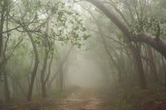 Foresta nebbiosa della stazione della collina di Matheran durante la stagione dei monsoni piovosa Fotografie Stock Libere da Diritti