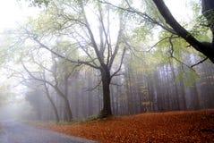 Foresta nebbiosa di autunno Fotografia Stock