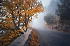 Foresta nebbiosa di autunno mistico con la strada Legno nebbioso di caduta immagini stock