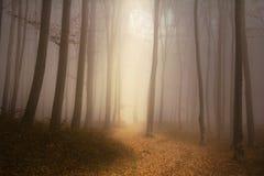 Foresta nebbiosa di favola Fotografie Stock