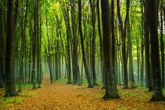 Foresta nebbiosa di favola Fotografia Stock