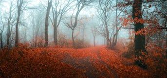 Foresta nebbiosa di fiaba nel corso della mattinata lunatica di autunno fotografie stock