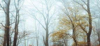 Foresta nebbiosa di fiaba nel corso della mattinata lunatica di autunno fotografia stock libera da diritti