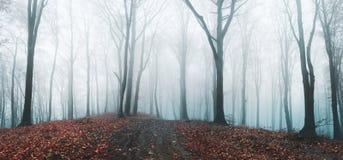 Foresta nebbiosa di fiaba nel corso della mattinata lunatica di autunno fotografia stock