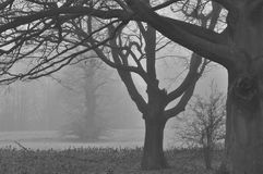 Foresta nebbiosa di inverno all'alba Immagini Stock Libere da Diritti