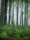 Foresta nebbiosa di mattina Fotografie Stock