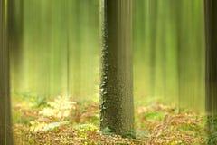 Foresta nebbiosa di mattina, tronco di albero e felce di autunno fotografie stock