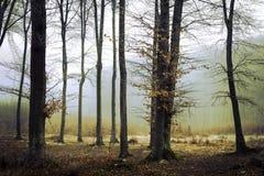 Foresta nebbiosa dopo pioggia Immagini Stock Libere da Diritti