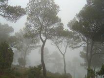 Foresta nebbiosa durante l'orario invernale fotografia stock