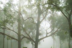 Foresta nebbiosa e mystical Fotografie Stock Libere da Diritti