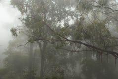 Foresta nebbiosa e mistica Fotografie Stock
