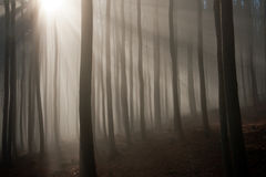 Foresta nebbiosa in mattina di autunno Fotografia Stock