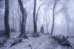 Foresta nebbiosa nell'inverno Immagini Stock Libere da Diritti