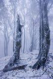 Foresta nebbiosa nell'inverno Fotografia Stock Libera da Diritti