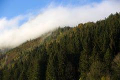 Foresta nebbiosa nelle montagne bavaresi Fotografie Stock Libere da Diritti