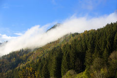 Foresta nebbiosa nelle montagne bavaresi Immagine Stock
