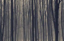Foresta nebbiosa scura con nebbia Fotografie Stock Libere da Diritti