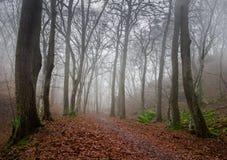 Foresta nebbiosa scura di autunno Immagine Stock Libera da Diritti
