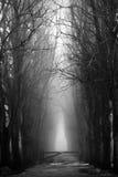 Foresta nebbiosa spaventosa in bianco e nero per Halloween Immagini Stock