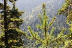 Foresta nebbiosa vicino al castello del Neuschwanstein, Germania Fotografia Stock Libera da Diritti