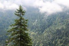 Foresta nebbiosa vicino al castello del Neuschwanstein, Germania Fotografia Stock
