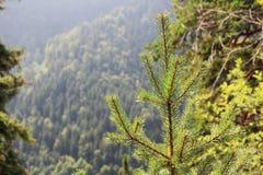 Foresta nebbiosa vicino al castello del Neuschwanstein, Germania Fotografie Stock