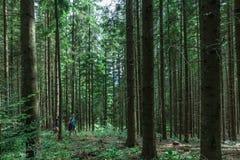 Foresta nei Carpathians Fotografia Stock