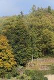 Foresta nei colori di autunno Immagini Stock Libere da Diritti