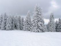 Foresta nel bianco, Pamporovo Fotografia Stock