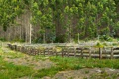 Foresta nel Cile Fotografie Stock