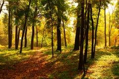 Foresta nel crepuscolo Fotografia Stock