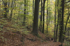 Foresta nel Croatia fotografie stock