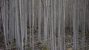Foresta nel giardino del castello, Alnarp Immagine Stock