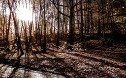 Foresta nel giorno soleggiato, Polonia di autunno fotografia stock