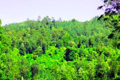 Foresta nel lago Cisanti immagini stock libere da diritti