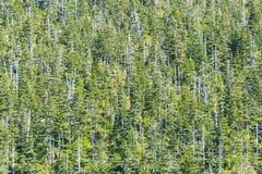 Foresta nel mutamento climatico Immagine Stock Libera da Diritti