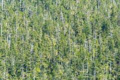 Foresta nel mutamento climatico Fotografia Stock Libera da Diritti