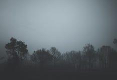 Foresta nel nero Fotografia Stock