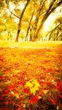 Foresta nel parco di autunno immagini stock